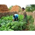 Frälsningsarméns insatser i Malawi hjälper bönderna få tio gånger större skördar.