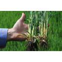 Världspremiär för Moddus Start – ge grödan en rivstart