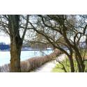Träd om våren i prinsens park