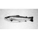 Få frisk fisk leveret med posten fra Osuma.dk