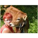Piiroomäen tilalla lehmät ammuvat suomeksi