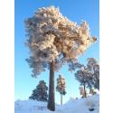 5:e plats i Sveriges bästa trädbild