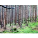 Skötsel för mer kvalitetsvirke från sydsvensk barrskog