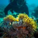 Fantastisk dykning på Zanzibar