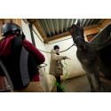 Unga i arbete hästnäring