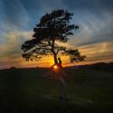 Hon fotade Sveriges bästa trädbild