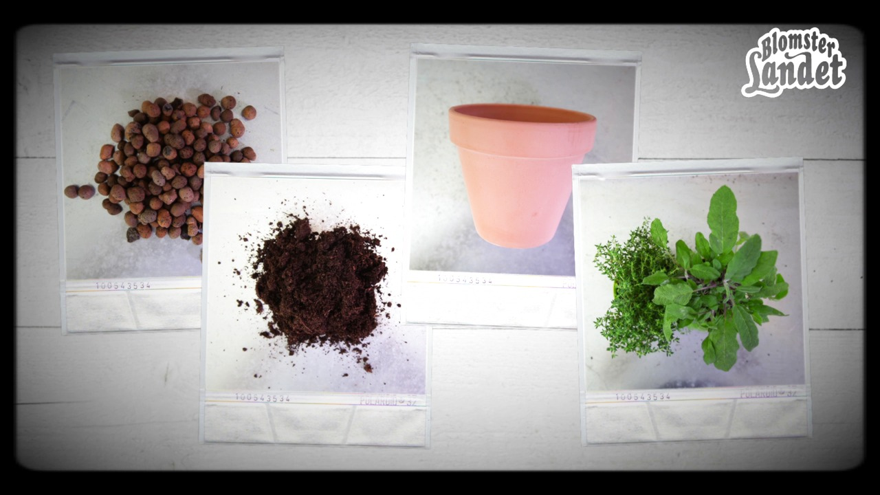 Video - odla kryddor i kruka