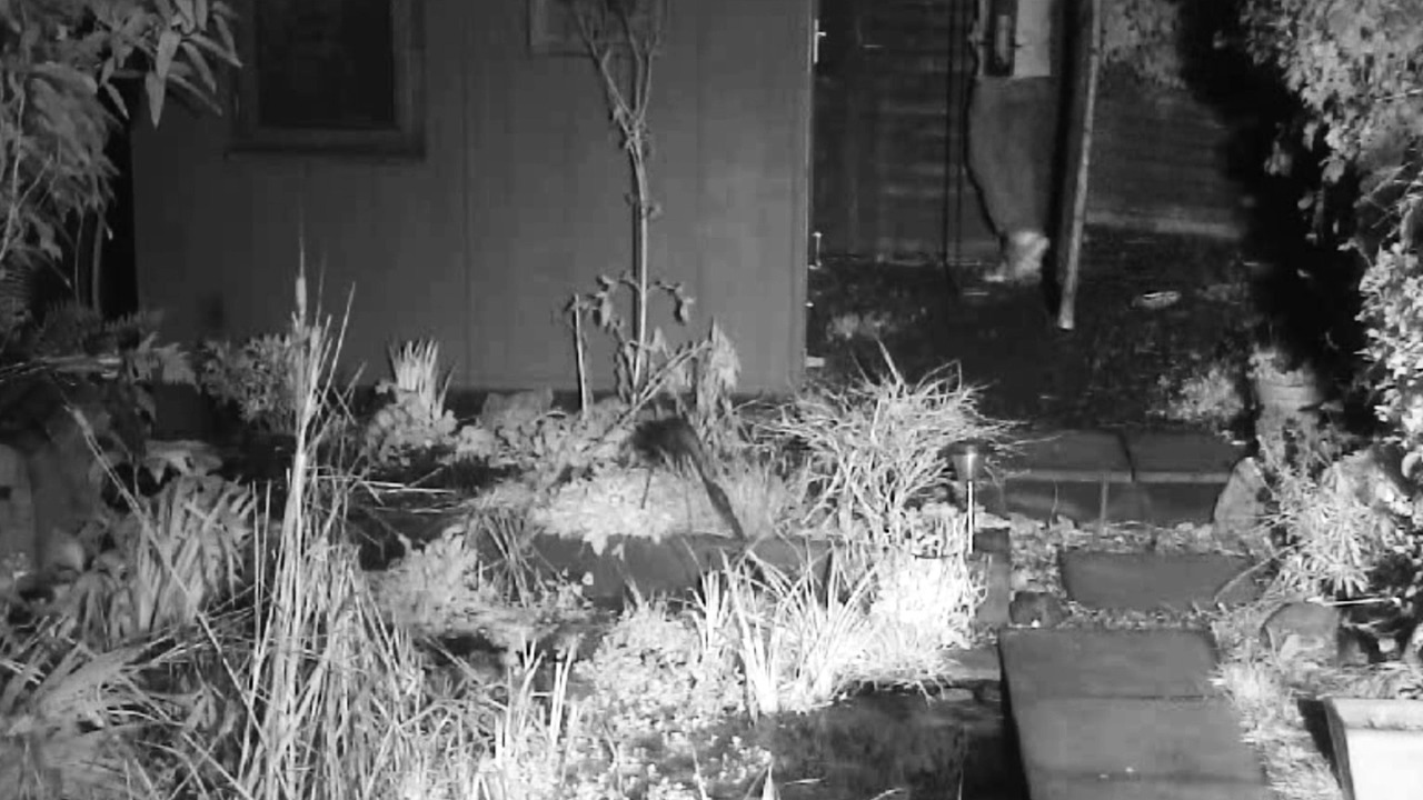 CCTV footage taken from the wildlife camera