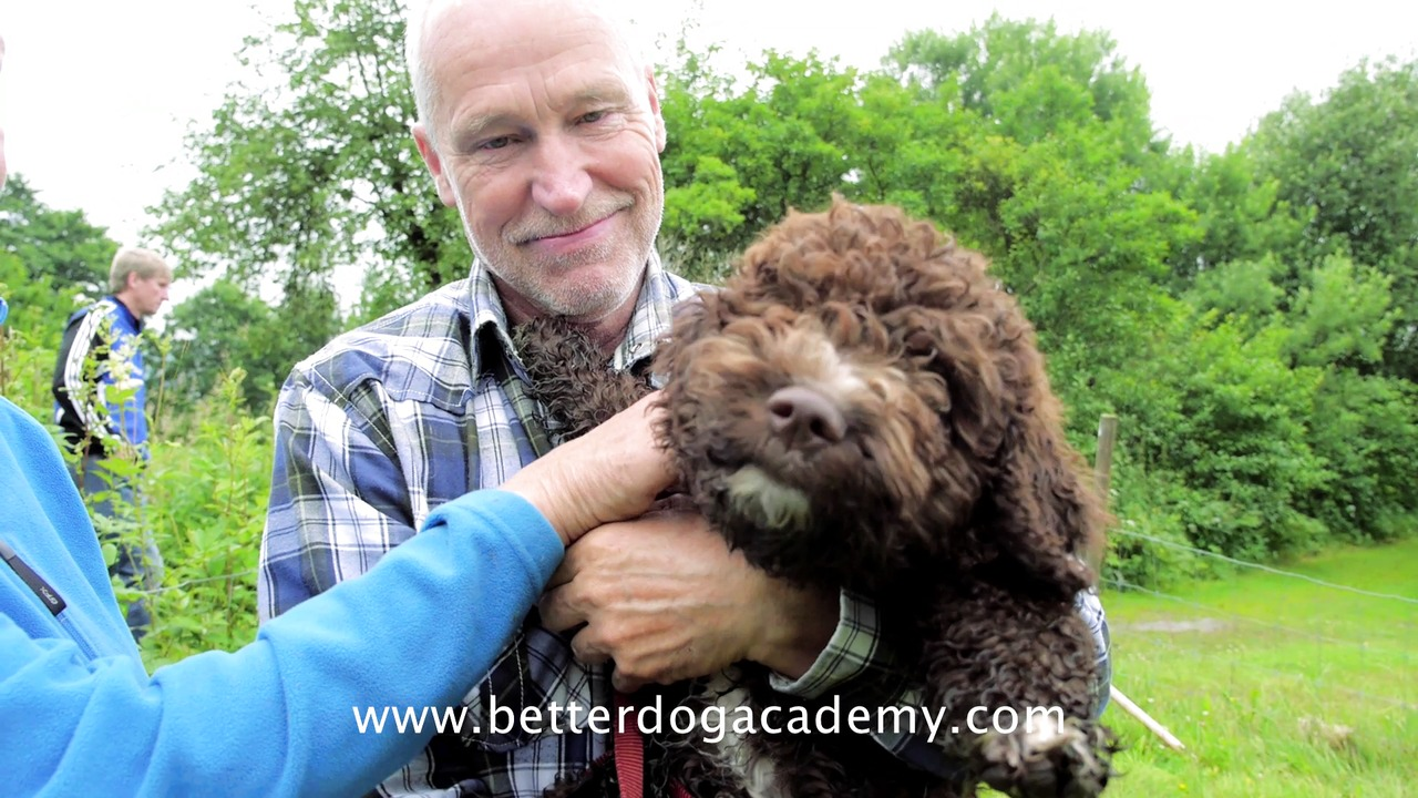 Om Better Dog Academy
