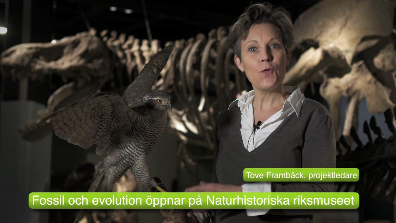 Fossil och evolution.