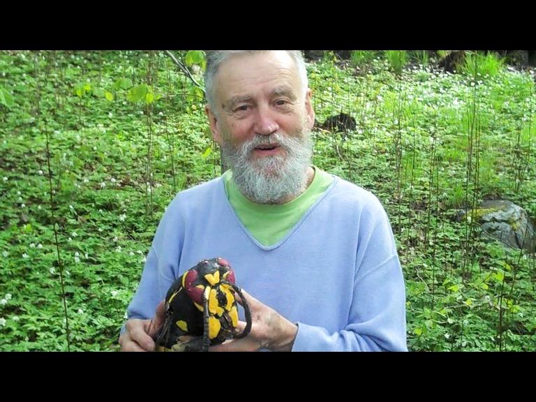 Kom och träffa legenden och getingexperten Urban Wahlstedt på lördag vid Angarnssjöängens Naturreservat