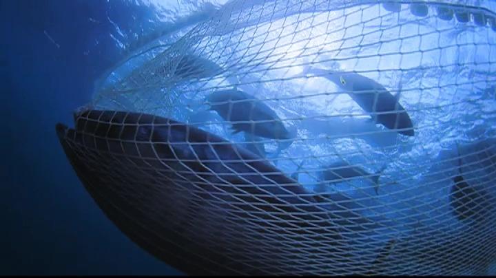 Yann Arthus-Bertrands Planet Ocean på DVD & Blu-ray 24 april