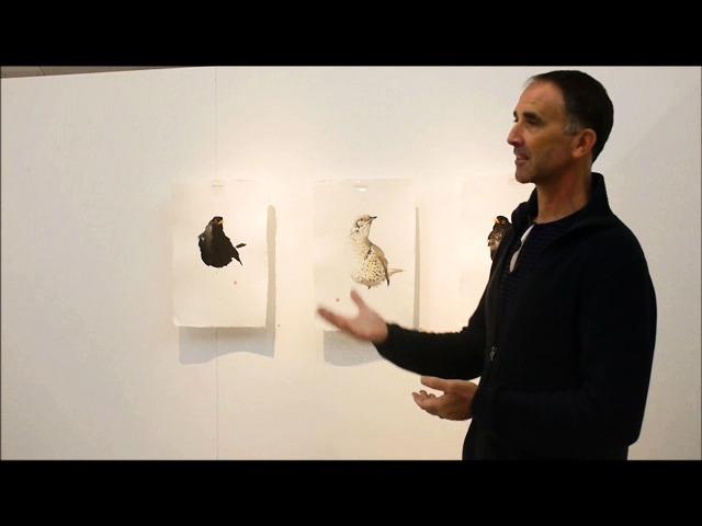 Karl Mårtens fantastiska femminuters fågelmålningar på Edsvik konsthall